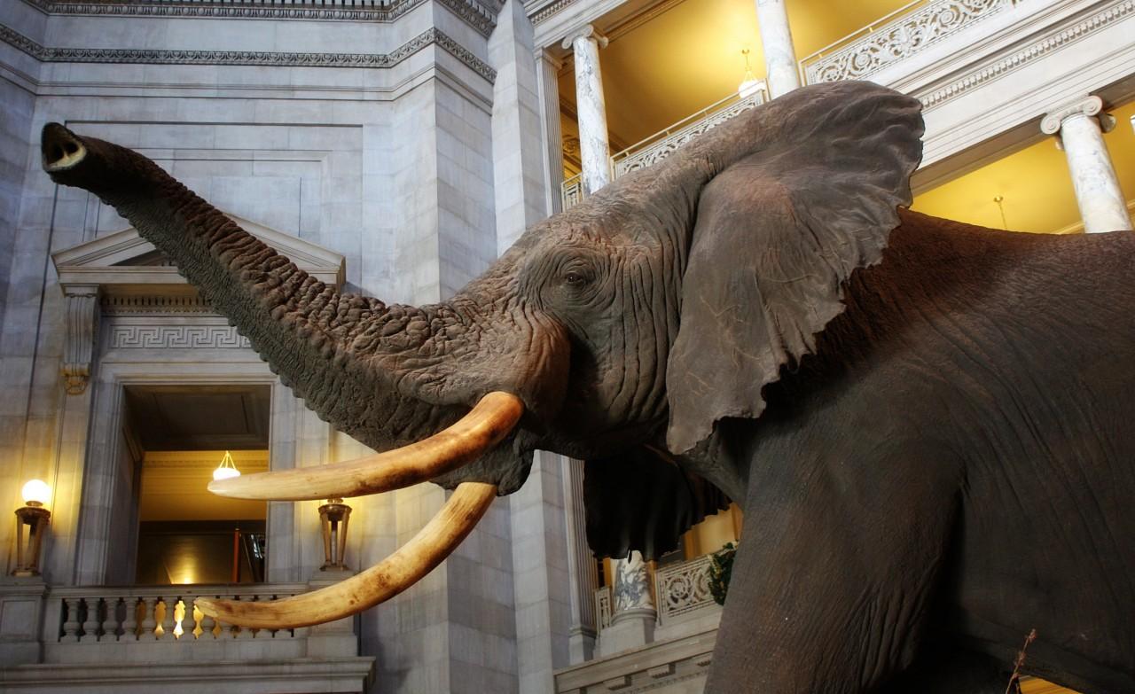 elephant-in-museum_GkIPn8uu